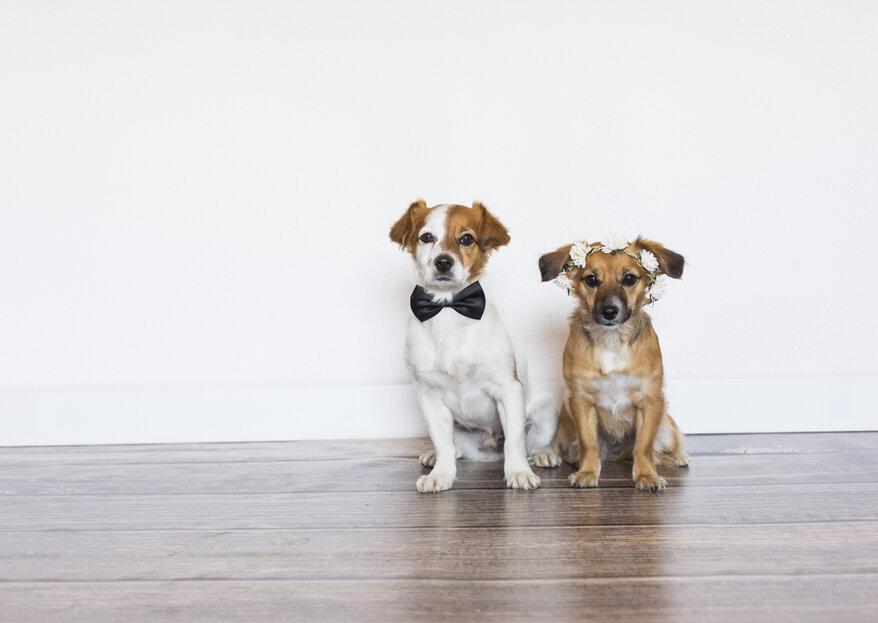 Wie Sie Ihr Haustier mit bei Ihrer Hochzeit einbinden können!